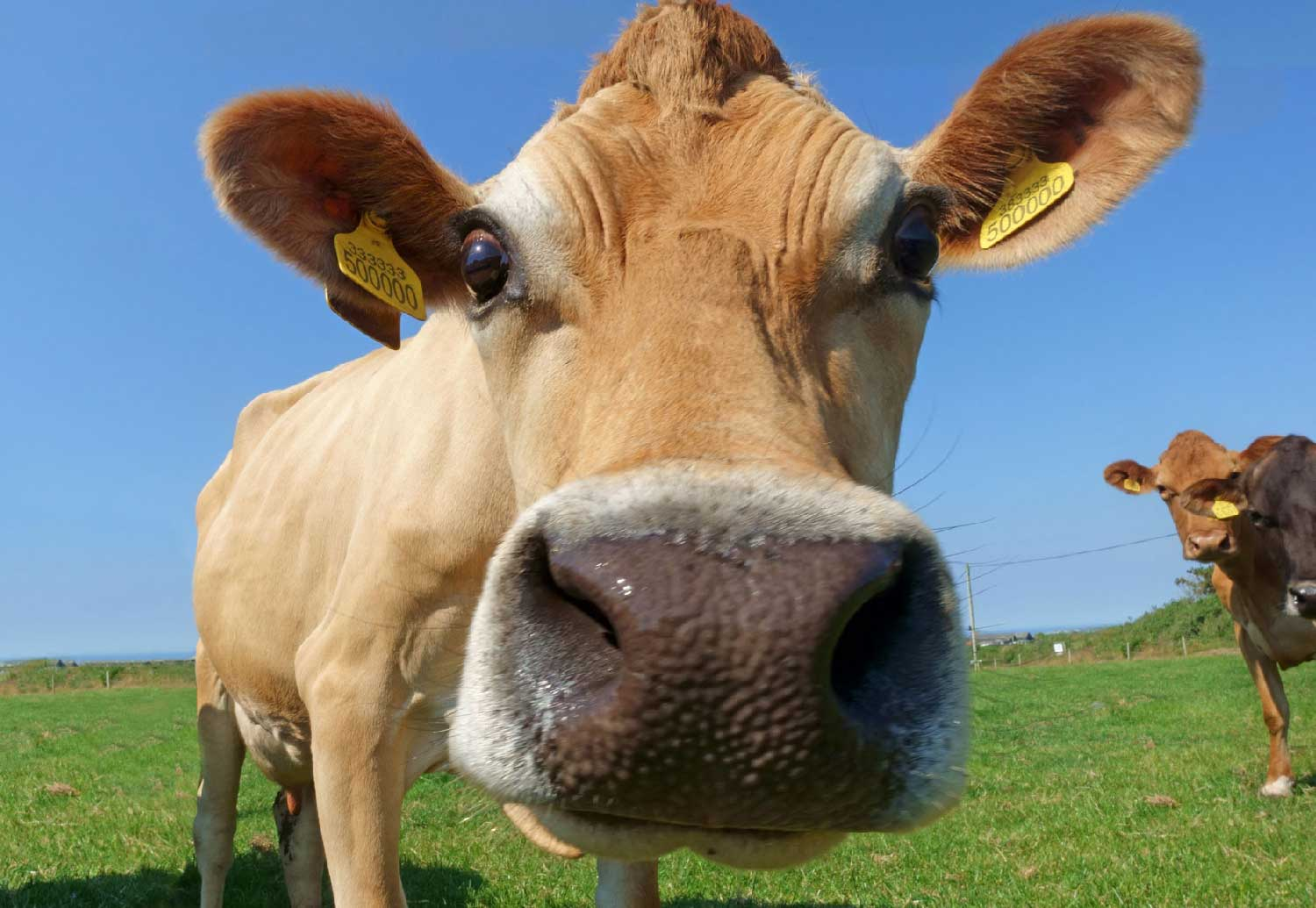 British Farmer Digs Ethereum With Cow Dung